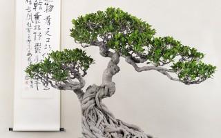 桑莲居 案上林泉——泉州盆景·赏石·书画迎春展