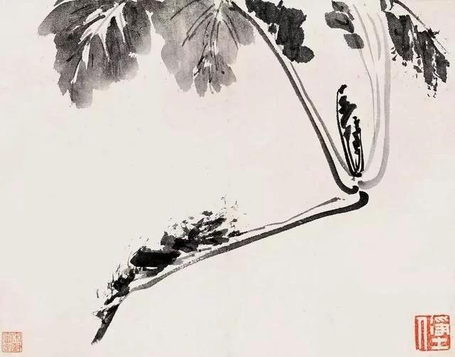 清 八大山人 传綮写生图之白菜 31.5cm×24.5cm 1659 台北故宫博物院藏